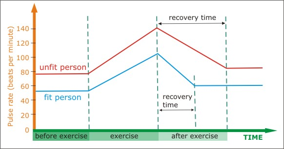 Comparing recovery time between fit and unfit person